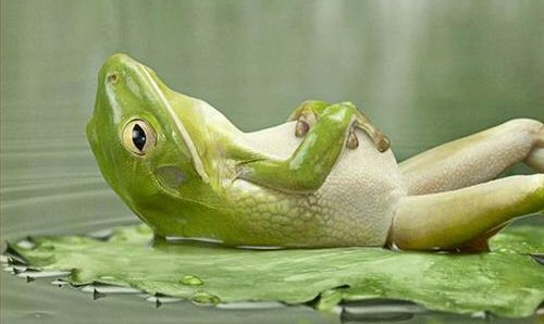 relaxed-frog